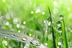 Erba verde fresca con il primo piano di goccia di rugiada Immagini Stock Libere da Diritti