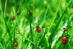 Erba verde fresca con le gocce dell'acqua Fotografie Stock