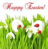 Erba verde fresca con le uova di Pasqua su bianco Fotografia Stock