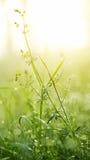 Erba verde fresca con rugiada Immagini Stock