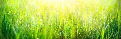 Erba verde fresca della molla con il primo piano di gocce di rugiada immagini stock