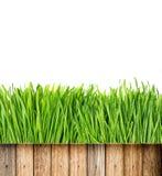 Erba verde fresca della molla con le gocce di acqua ed il recinto di legno Fotografie Stock Libere da Diritti