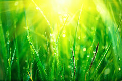 Erba verde fresca della molla con le gocce di rugiada Fotografia Stock