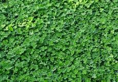 Erba verde fresca della sorgente. Immagini Stock Libere da Diritti