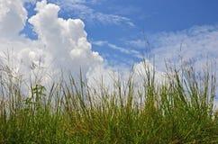 Erba verde fresca e nuvole bianche su cielo blu Fotografia Stock