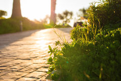 Erba verde fresca sulla natura che incornicia il sole nel mezzo e che forma i raggi di luce Fotografie Stock
