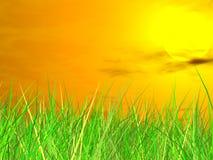 Erba verde fresca sulla priorità bassa del tramonto Fotografia Stock