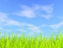 Erba verde fresca sulla priorità bassa piena di sole blu del cielo Immagini Stock Libere da Diritti