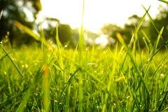 Erba verde, gocce di acqua, mattina, parco fotografia stock libera da diritti