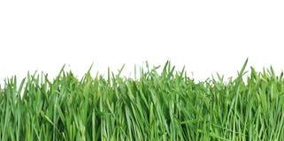 Erba verde, il backgr della natura Fotografia Stock