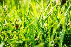 Erba verde intenso Immagine Stock Libera da Diritti