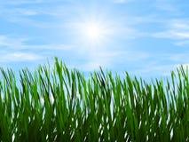 Erba verde intenso sugli ambiti di provenienza di un raggio di sole del cielo blu Immagine Stock Libera da Diritti