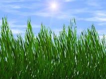 Erba verde intenso sugli ambiti di provenienza di un raggio di sole del cielo blu Fotografia Stock Libera da Diritti
