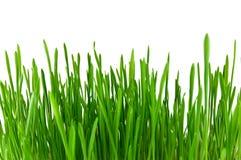 Erba verde isolata Immagini Stock Libere da Diritti