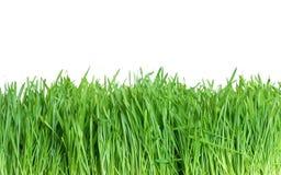 Erba verde isolata fotografie stock