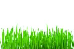 Erba verde isolata Immagine Stock Libera da Diritti