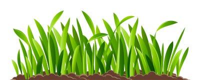 Erba verde isolata Immagine Stock