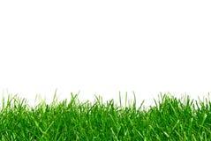 Erba verde isolata su bianco Fotografia Stock Libera da Diritti