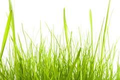 Erba verde isolata su bianco fotografie stock