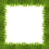 Erba verde isolata su priorità bassa bianca immagini stock