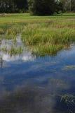 Erba verde in lago fotografia stock