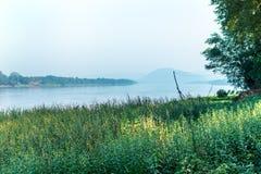 Erba verde laterale del fiume fotografie stock libere da diritti