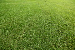 Erba verde naturale Immagine Stock