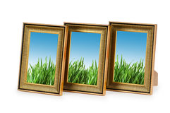 Erba verde nei telai Immagine Stock