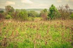Erba verde nel calore Fotografie Stock