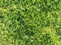 Erba verde nel giardino Immagini Stock Libere da Diritti