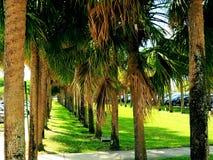 Erba verde nel parcheggio, FL Fotografia Stock Libera da Diritti