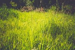 Erba verde nel parco fotografia stock libera da diritti