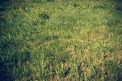 Erba verde nel parco fotografia stock