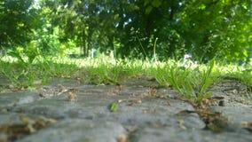 Erba verde nel parco Immagini Stock