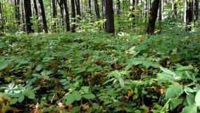 Erba verde nella foresta archivi video