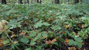 Erba verde nella foresta stock footage