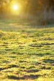 Erba verde nella foresta Fotografia Stock