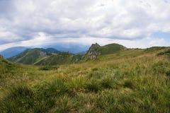 Erba verde nella priorità alta, paesaggio del prato un giorno di estate Fotografia Stock