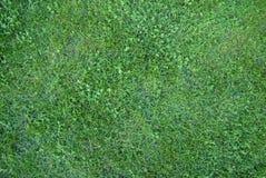 Erba verde nella sosta della città Fotografia Stock