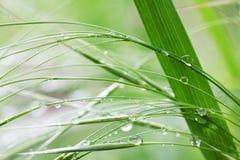 Erba verde nelle gocce di pioggia nella mattina di estate immagine stock libera da diritti