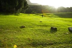 Erba verde in parco Immagini Stock Libere da Diritti