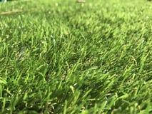 Erba verde piacevole davanti alla mia casa Fotografie Stock Libere da Diritti