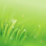 Erba verde Priorità bassa della natura illustrazione vettoriale