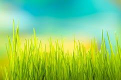 Erba verde Profondità del campo poco profonda Immagini Stock