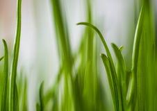 Erba verde Profondità del campo poco profonda Fotografie Stock Libere da Diritti