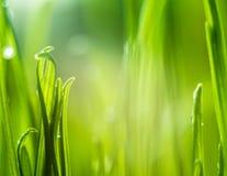 Erba verde Profondità del campo poco profonda Immagine Stock