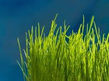 Erba verde Profondità del campo poco profonda Fotografia Stock Libera da Diritti