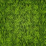 Erba verde Sfondo naturale Struttura Erba alta Erba verde della sorgente fresca Fotografia Stock