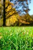Erba verde sopra la foresta d'autunno immagini stock libere da diritti