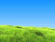 Erba verde sotto chiaro cielo blu Immagini Stock